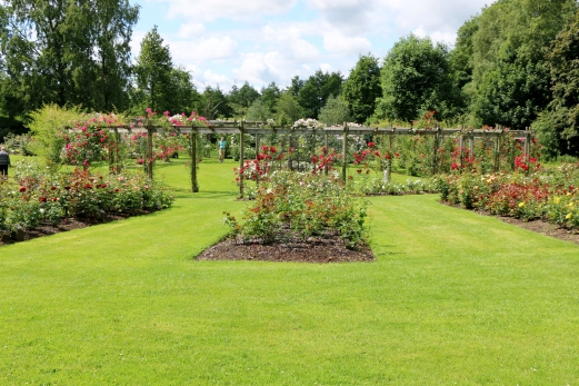 Belfast Rose Week Princess Diana Memoria Garden